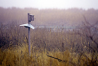 WETLANDS<br /> Nest Box<br /> Jamaica Bay, NY