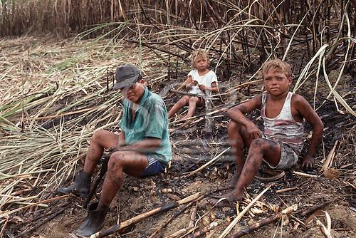 Pernambuco State, north-east Brazil. Child farm workers harvesting sugar cane.