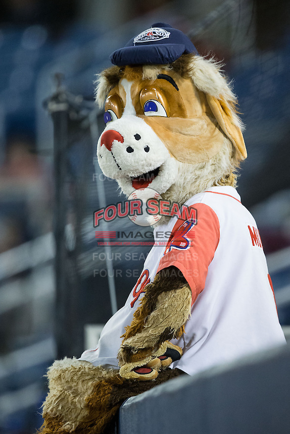 "Salem Red Sox mascot ""Mugsy"" watches the action from the top of the home dugout during the game against the Winston-Salem Dash at LewisGale Field at Salem Memorial Ballpark on May 13, 2015 in Salem, Virginia.  The Red Sox defeated the Dash 8-2.  (Brian Westerholt/Four Seam Images)"