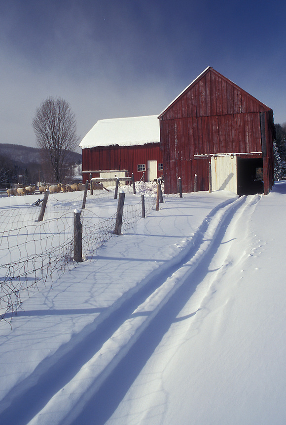 red barn, Vermont, VT, Tracks in the snow leading into the red barn on Otterman Farm in West Topsham in the winter.