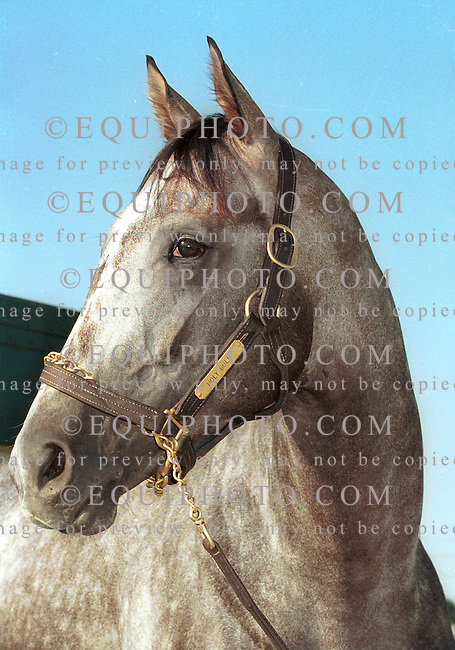 Portrait of Holy Bull at Monmouth Park.  7/22/94..Photo By Bill Denver/EQUI-PHOTO