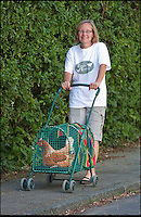 BNPS.co.uk (01202 558833)<br /> Pic: PhilYeomans/BNPS<br /> <br /> Julie walks her own hens around the village.<br /> <br /> Fowlty Towers - Egg-ceptional new hotel for hens.<br /> <br /> The boom in hen keeping across Britain has led a canny Kent lady to spotting a gap in the market for a deluxe hotel for punters beloved poultry whilst they jet off on their summer hols. <br /> <br /> Julie Smith from Cowden is inundated with requests for 'rooms' at 'Fowlty Towers', with customers booking months in advance to secure a spot for their prized birds. <br /> <br /> Julie's all-inclusive resort costs a poultry &pound;7 a night for each run, with round the cluck service including all food and drink.