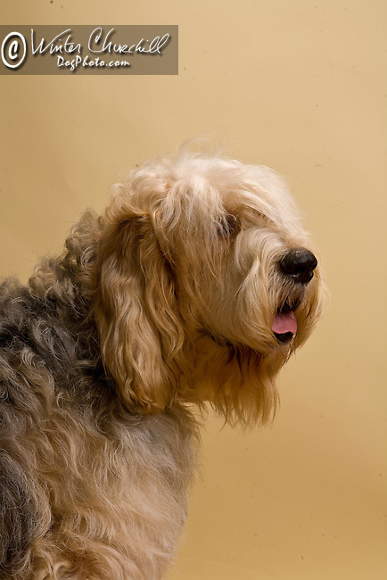 Otterhound<br /> <br /> <br />  Shopping cart has 3 Tabs:<br /> <br /> 1) Rights-Managed downloads for Commercial Use<br /> <br /> 2) Print sizes from wallet to 20x30<br /> <br /> 3) Merchandise items like T-shirts and refrigerator magnets