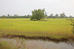 Rice Field On Way to Chun's Farm
