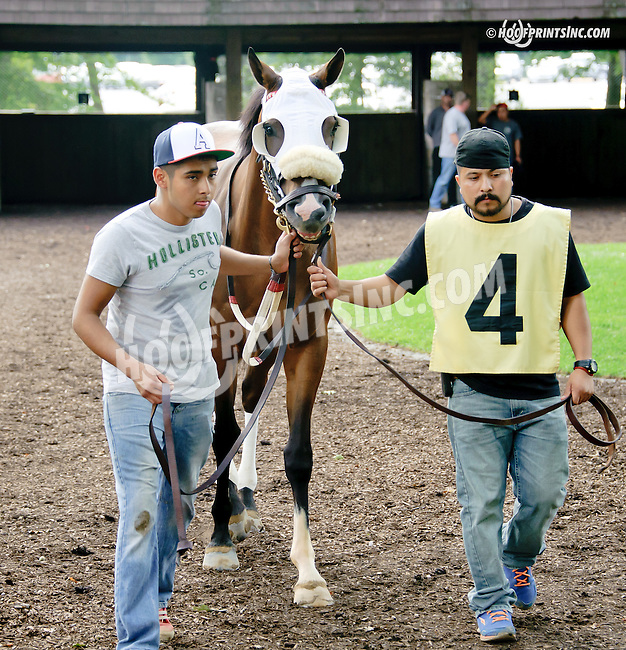 Manille at Delaware Park racetrack on 7/30/14
