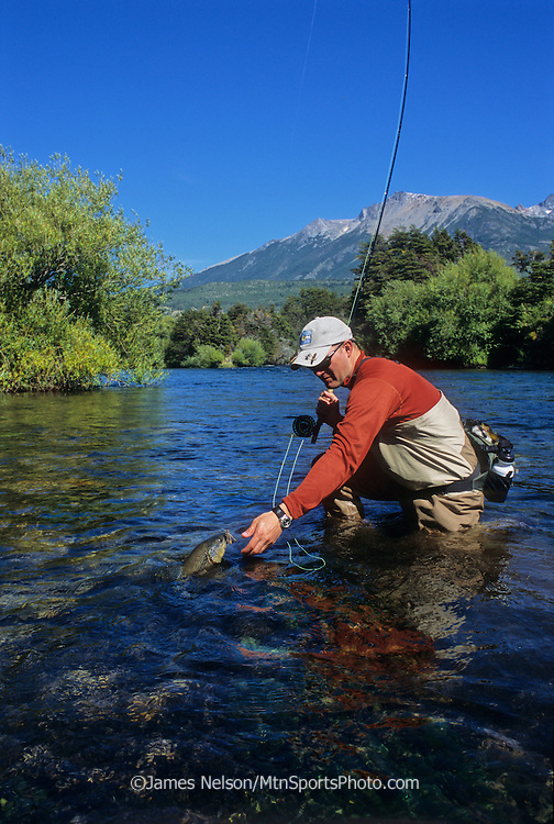 08128-Z. A fly fisherman brings a large brown trout to hand on the Rio Corcovado in the Patagonia region of Argentina.