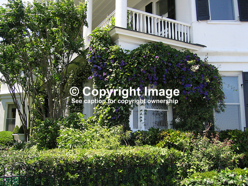 Typical creeper clad house, Charleston, South Carolina, USA. 200705140068..Copyright Image from Victor Patterson, 54 Dorchester Park, Belfast, UK, BT9 6RJ..Tel: +44 28 9066 1296.Mob: +44 7802 353836.Voicemail +44 20 8816 7153.Skype: victorpattersonbelfast.Email: victorpatterson@mac.com.Email: victorpatterson@ireland.com (back-up)..IMPORTANT: If you wish to use this image or any other of my images please go to www.victorpatterson.com and click on the Terms & Conditions. Then contact me by email or phone with the reference number(s) of the image(s) concerned.