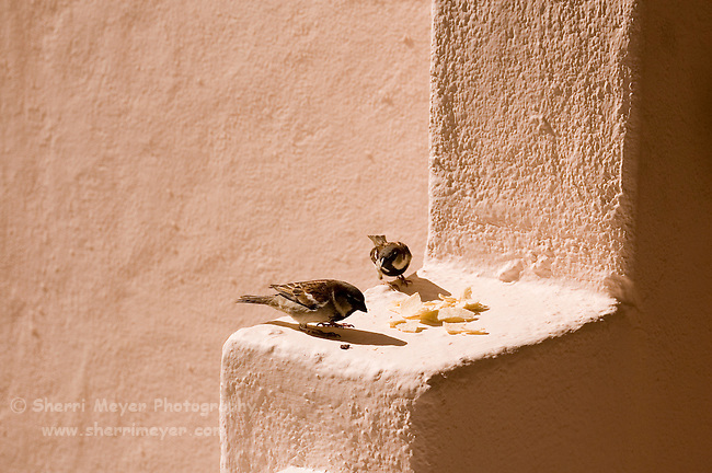 Birds eating tortillas on our veranda, Pueblo Bonito Rose, Baja California, Mexico