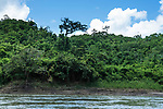 A large ceiba tree, the Tree of Life in Mayan mythology, on the Guatemalan shore of the Usumacinta River.