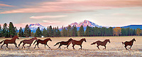 Iron horse sculpture with Three Sisters Mountains. Oregon