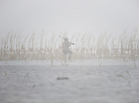 Pat Berggren (cq) retrieves a duck back after a kill during a hunting trip just off the duck-rich Platte River in Nebraska, Saturday, December 3, 2011...Photo by Matt Nager
