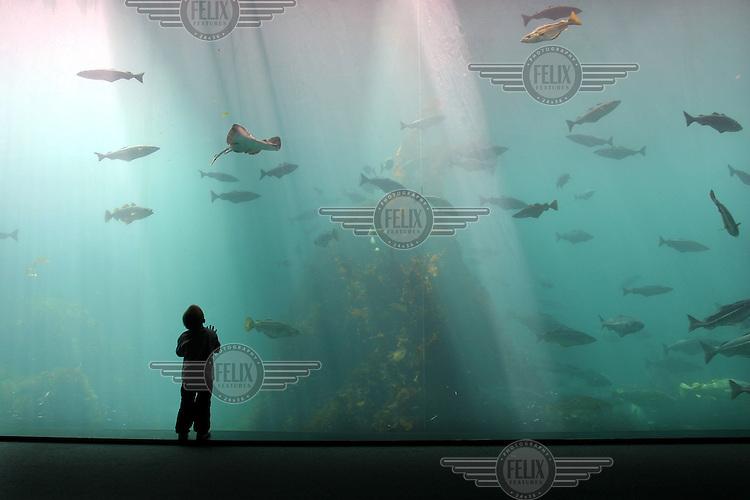 2002.07.30 Gutt ser på fisk, blant annet torsk, skate og sei. Atlanterhavsparken, Ålesund Akvaruim. Møre og Romsdal. © Fredrik Naumann / Samfoto   <1000133312 : DIGITALBILDE : N : AKVARIUM : 7735......>  18,4 MB TIF 21.08.02 15:27