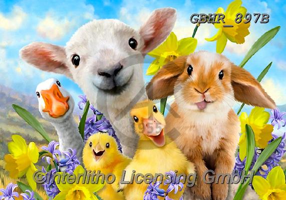 Howard, SELFIES, paintings+++++,GBHR897B,#Selfies#, EVERYDAY ,eastern,sheeps