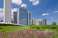 The Lurie Garden in Millennium Park adds a bit of nature to the urban scene, Chicago, Illinois