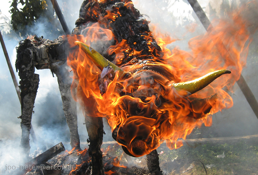 sarcophage sculpture of a bull burning  in cremation ceremonies in village Petulu, north of Ubud, , Bali, archipelago Indonesia