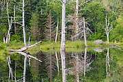 Reflection of trees in Wildlife Pond in Bethlehem, New Hampshire USA during the summer months.