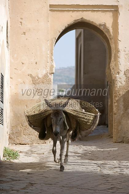 Afrique/Afrique du Nord/Maroc/Fèz: ane passant par la petite porte de la médina
