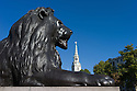 15.10.11. London, UK. One of the famous lions, Trafalgar Square, London, in front of St Martin in the Fields church, in the uncharacteristic, blazing, October sunshine.