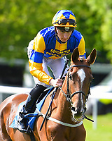 Maroon Bells ridden by Hector Crouch goes down to the start of The Smith & Williamson Fillies' Novice Stakes (Class 5 during Afternoon Racing at Salisbury Racecourse on 17th May 2018