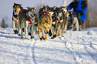 Cindy Galleas team arriving into Takotna Chkpt during 2006 Iditarod Takotna Alaska Interior Winter