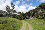 Tapapakanga Regional Park,Historic and Coastal Loop tracks, 13 November 2018. Photo: Simon Watts/www.bwmedia.co.nz