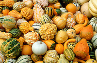 Gourds at Circleville Pumpkin Festival, central, Ohio