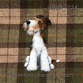 Simon, REALISTIC ANIMALS, REALISTISCHE TIERE, ANIMALES REALISTICOS, innovative, paintings+++++SharonS_WireFoxTerrier,GBWR224,#a#, EVERYDAY dogs,breeds of dog,