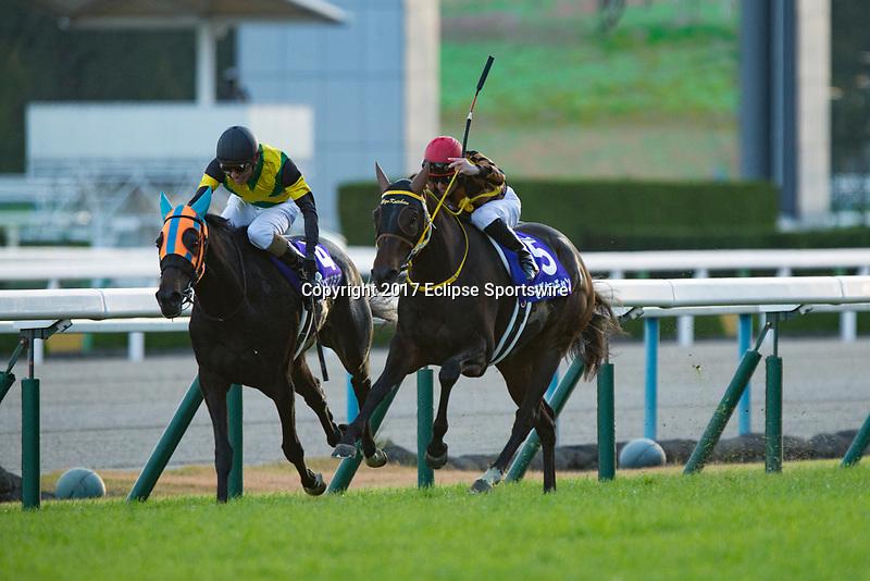 KYOTO,JAPAN-NOVEMBER 12: Mozu Katchan #5,ridden by Mirco Demuro,wins the Queen Elizabeth ll Cup at Kyoto Racecourse on Nobember 12,2017 in Kyoto,Kyoto,Japan (Photo by Kaz Ishida/Eclipse Sportswire/Getty Images)