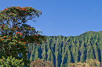 The awe inspiring Koolau Mountains ascend from Waimanalo on windward Oahu.