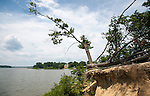 A single tree hangs precariously off of a cliff gouged by erosion at Quiet Waters Park.
