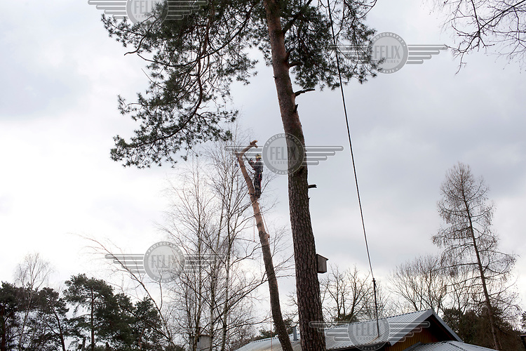 Grzegorz cuts down a tree in a small town near Warsaw. A controversial new law has allowed the felling of trees that were previously protected leading to an increase of logging throughout Poland.