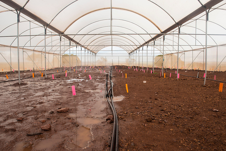 Study into the effects of rainfall, irrigation and soil composition in restoration at the Sinosteel iron ore mine close to Morowa, Western Australia.