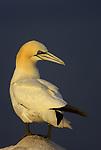 Seabird Special