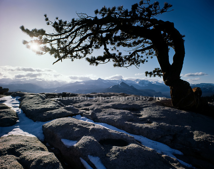 Jeffrey pine, Sentinel Dome, Yosemite National Park