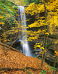 Matthiessen State Park, IL<br /> Matthiessen Falls from Upper Dells hillside through fall colored maple trees