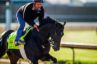 May 01, 2014: Dance With Fate prepares for the Kentucky Derby at Churchill Downs in Louisville Ky. Alex Evers/ESW/CSM