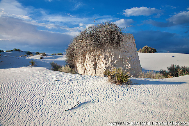 The crystal white dunes of White Sands National Monument are extremely varied and interesting when seen  up close.