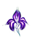Artistic abstract illustration of a beautiful dancing lady exotic iris flower fairy with purple petals isolated on white background