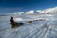 Musher David Milne  on trail Ptarmigan Flats near Rainy Pass Iditarod Sled Dog Race 1995