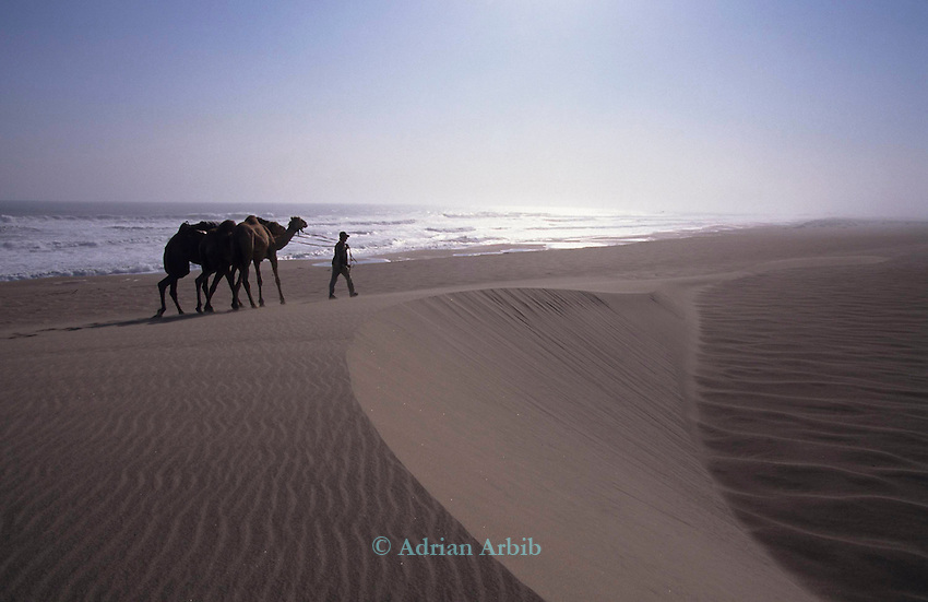 Benedict Allen and his team of camels negotiate a sand dune during his journey along the Skeleton coast of Namibia from South Africa to Angola.  Namib Naukluft desert ...