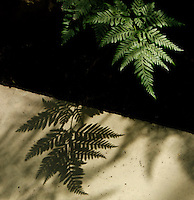 Plant History Glasshouse (formerly Australian Glasshouse), 1830s, Rohault de Fleury, Jardin des Plantes, Museum National d'Histoire Naturelle, Paris, France. Detail of cyatheales leaf throwing its shadow onto a white shelf below.