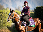 ARCADIA, CA: Breeders' Cup Turf entrant Anthony Van Dyck, trained by Aidan P. O'Brien, on the track in preparation for the Breeders' Cup World Championships at Santa Anita Park in Arcadia, California on October 31, 2019.
