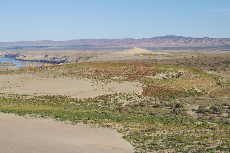 Hanford Reach National Monument, Wahluke Slope, Columbia River, shrub steppe habitat, grassland, Columbia Basin, eastern Washington, Washington State, Pacific Northwest, USA, North America,