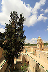 Israel, Jerusalem, Cypress tree at the Greek Orthodox Monastery of the Holy Cross