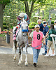 post parade before the Bob Magness Memorial Derby (Gr. 1) at Delaware Park on 5/30/09
