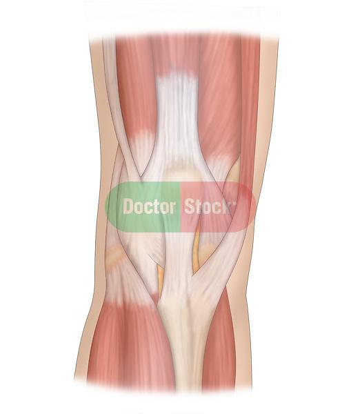 anterior view of knee