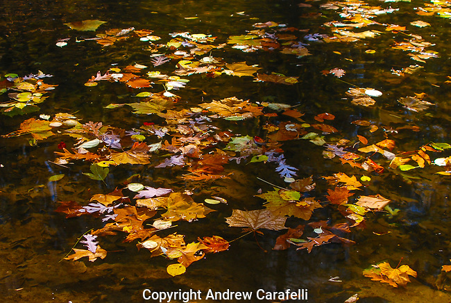 Fall leaves float on still waters in West Virginia.