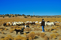 Navajo herder, with her flock of Navajo Churro sheep at home of Jay and Helen Begay, Rocky Ridge, Navajo Indian Reservation, Arizona, AGPix_0625.