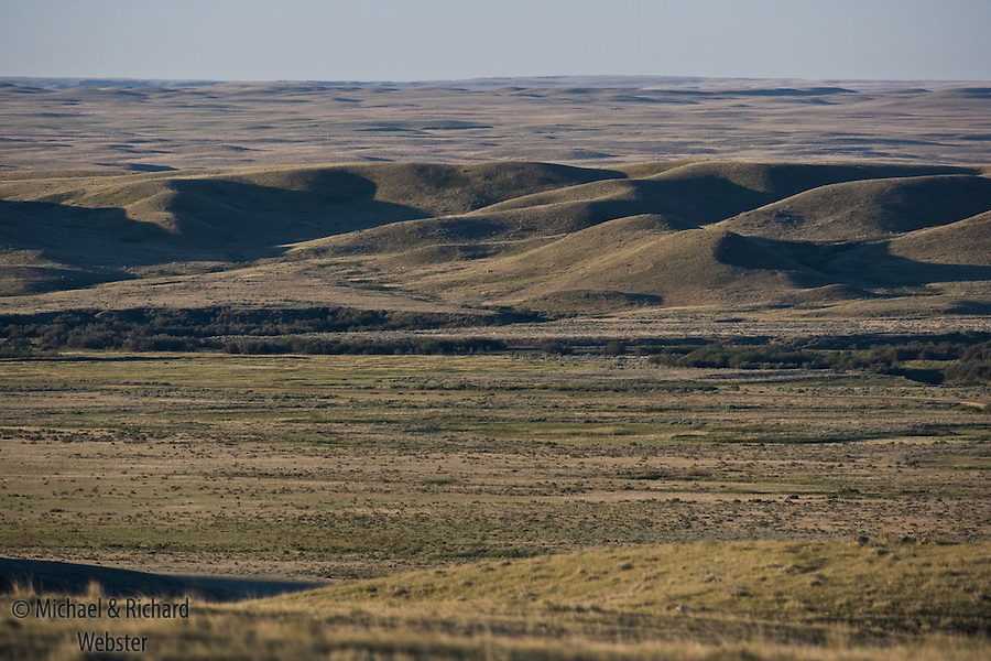 Southern Saskatchewan is the location of one of Canadas least visied, least disturbed and most glorious national Park, Grasslands.  Protecting the last remaining native short grass praries in Canada.