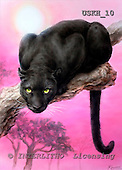 Kayomi, REALISTIC ANIMALS, paintings, panther, BlackPanther_M, USKH10,#A# realistische Tiere, realista, illustrations, pinturas